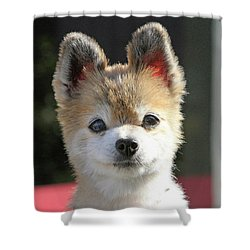 Cute Stare Down Shower Curtain