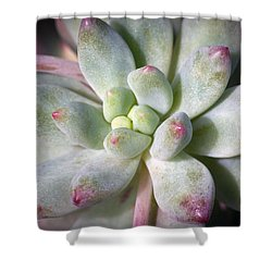 Cute Succulent Plant Shower Curtain by Catherine Lau