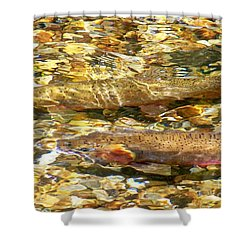 Cutthroat Trout In Clear Mountain Stream Shower Curtain by Greg Hammond
