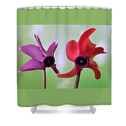 Cyclamen Duet. Shower Curtain