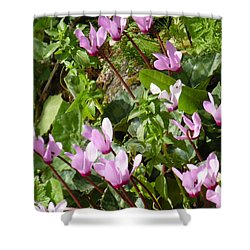 Cyclamen In Spring Shower Curtain by Esther Newman-Cohen
