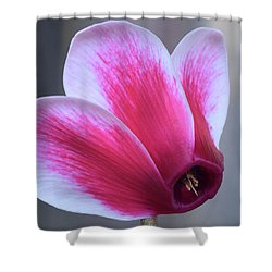 Shower Curtain featuring the photograph Cyclamen Portrait. by Terence Davis