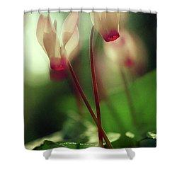 Cyclamens Shower Curtain by Dubi Roman