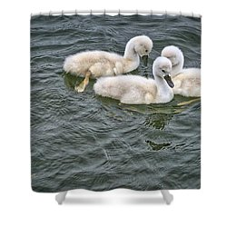 Cygnet Ring Shower Curtain