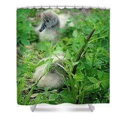 Cygnets V Shower Curtain by Cassandra Buckley