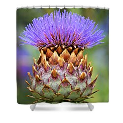 Cynara Cardunculus. Shower Curtain