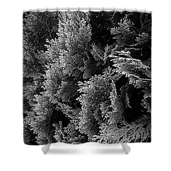 Cypress Branches No.1 Shower Curtain
