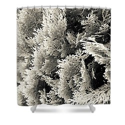 Cypress Branches No.2 Shower Curtain