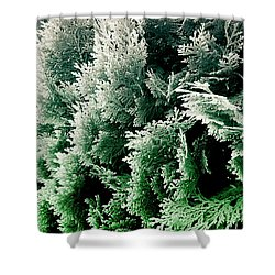 Cypress Branches No.5 Shower Curtain