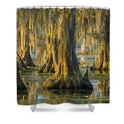 Cypress Canopy Uncovered Shower Curtain by Kimo Fernandez