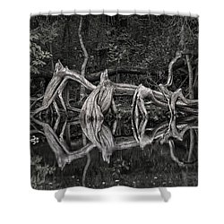 Shower Curtain featuring the photograph Cypress Design by Steven Sparks