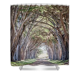 Shower Curtain featuring the photograph Cypress Embrace by Everet Regal