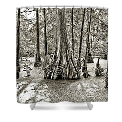Cypress Evening Shower Curtain by Scott Pellegrin