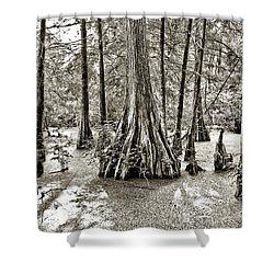 Cypress Evening Shower Curtain by Scott Pellegrin
