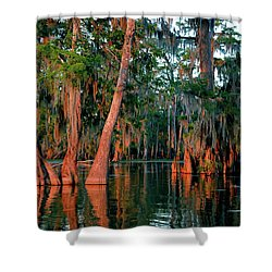 Shower Curtain featuring the photograph Cypress Grove by Nicholas Blackwell