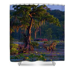 Cypress In The Sunset Shower Curtain by Kimo Fernandez
