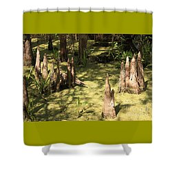 Cypress Knees In Green Swamp Shower Curtain by Carol Groenen