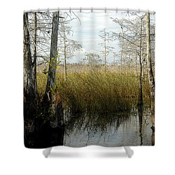 Cypress Landscape Shower Curtain by David Lee Thompson