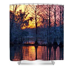Cypress Sunrise Shower Curtain by Kimo Fernandez