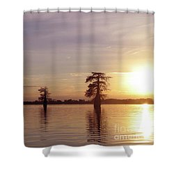 Cypress Sunset Shower Curtain by Sheila Ping