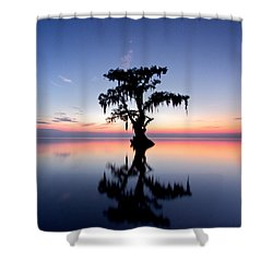 Shower Curtain featuring the photograph Cypress Tree by Evgeny Vasenev