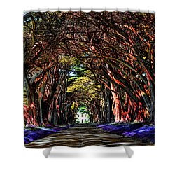 Cypress Tree Tunnel Shower Curtain
