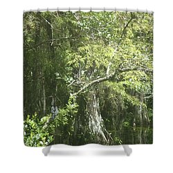 Cyprus Shower Curtain