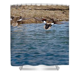 Gadwall Ducks - In Flight Side By Side Shower Curtain