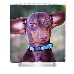 Dachshund Ears Up Shower Curtain by Stephanie Hayes