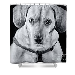 Dachshund Lab Mix Shower Curtain by Stephanie Hayes