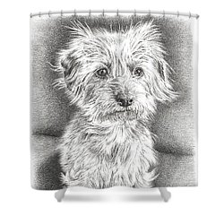 Dachshund Maltese Shower Curtain