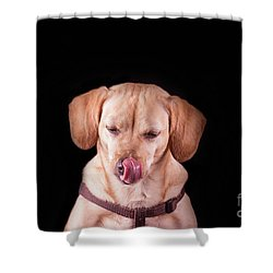 Dachshund Mix Licking Lips Shower Curtain by Stephanie Hayes