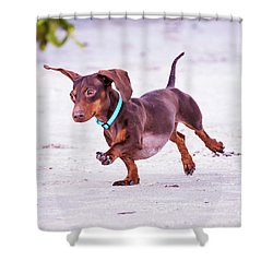 Dachshund On Beach Shower Curtain by Stephanie Hayes