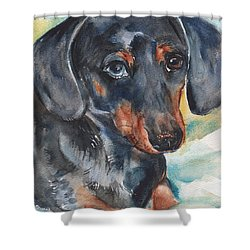 Dachshund Portrait In Watercolor Shower Curtain