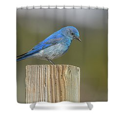 Daddy Bluebird Guarding Nest Shower Curtain
