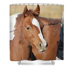 Daddys Home Shower Curtain