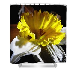 Shower Curtain featuring the photograph Daffodil 2 by Rose Santuci-Sofranko