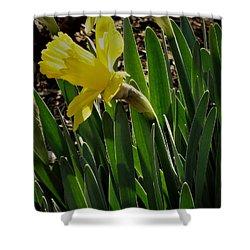 Daffodil Crown Shower Curtain