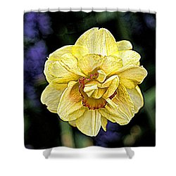 Shower Curtain featuring the photograph Daffodil Dallas Arboretum by Diana Mary Sharpton