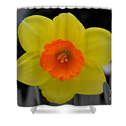 Daffodil Delight  Shower Curtain