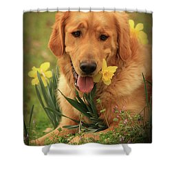 Shower Curtain featuring the photograph Daffodil Dreams by Kim Henderson