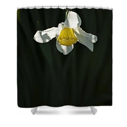 Shower Curtain featuring the photograph Daffodil by Elsa Marie Santoro