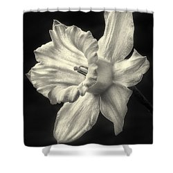 Daffodil Glow Shower Curtain