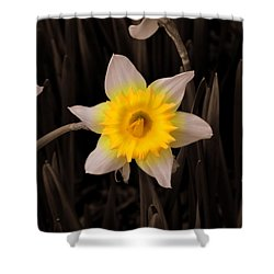 Shower Curtain featuring the photograph Daffodil by Lisa Wooten