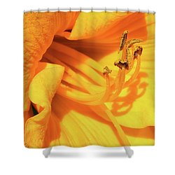 Daffodil - Peeping Tom 06 Shower Curtain