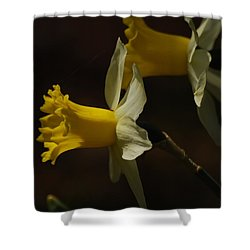 Shower Curtain featuring the photograph Daffodil by Ramona Whiteaker