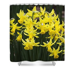 Daffodil Yellow Shower Curtain