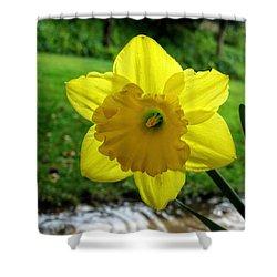 Daffodile In The Rain Shower Curtain by Dorothy Cunningham