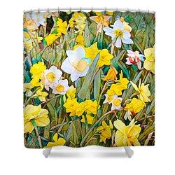Daffodils 13 Shower Curtain