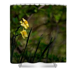 Daffodils Among The Green Shower Curtain